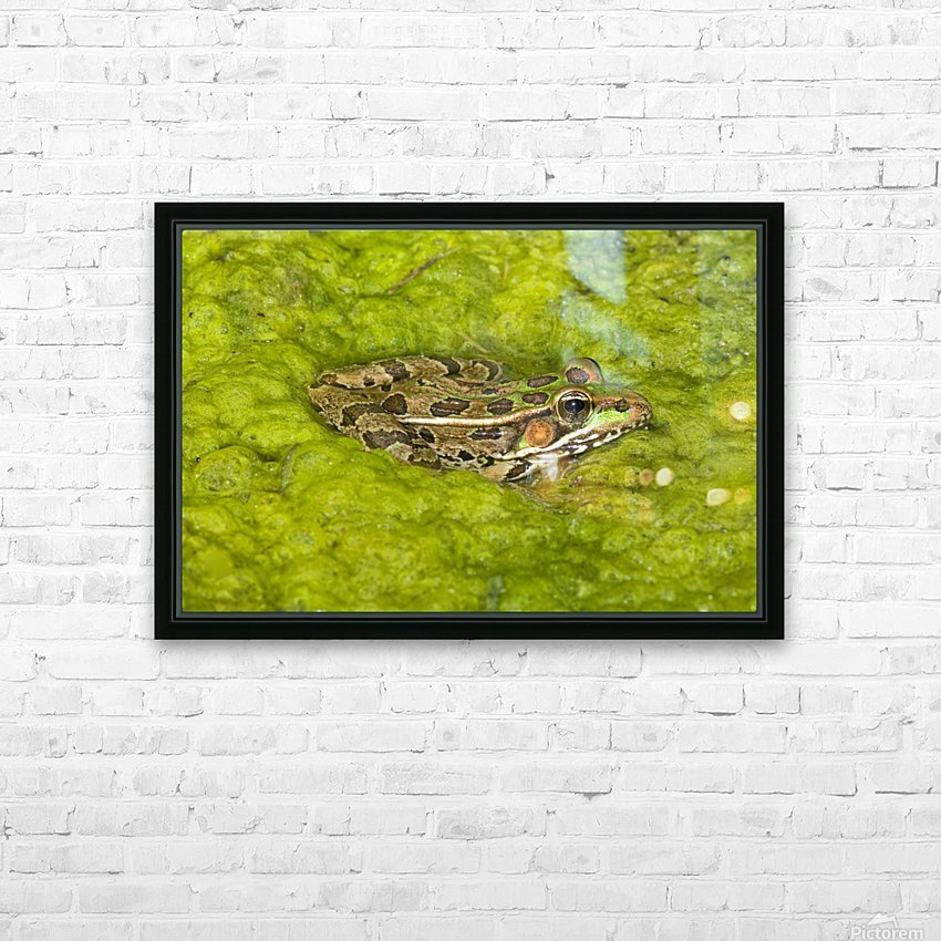A Rio Grande Leopard Frog Sitting On A Bed Of Algae HD Sublimation Metal print with Decorating Float Frame (BOX)