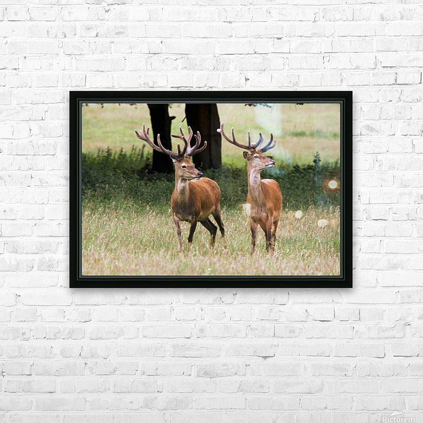 Elk In The Wild HD Sublimation Metal print with Decorating Float Frame (BOX)