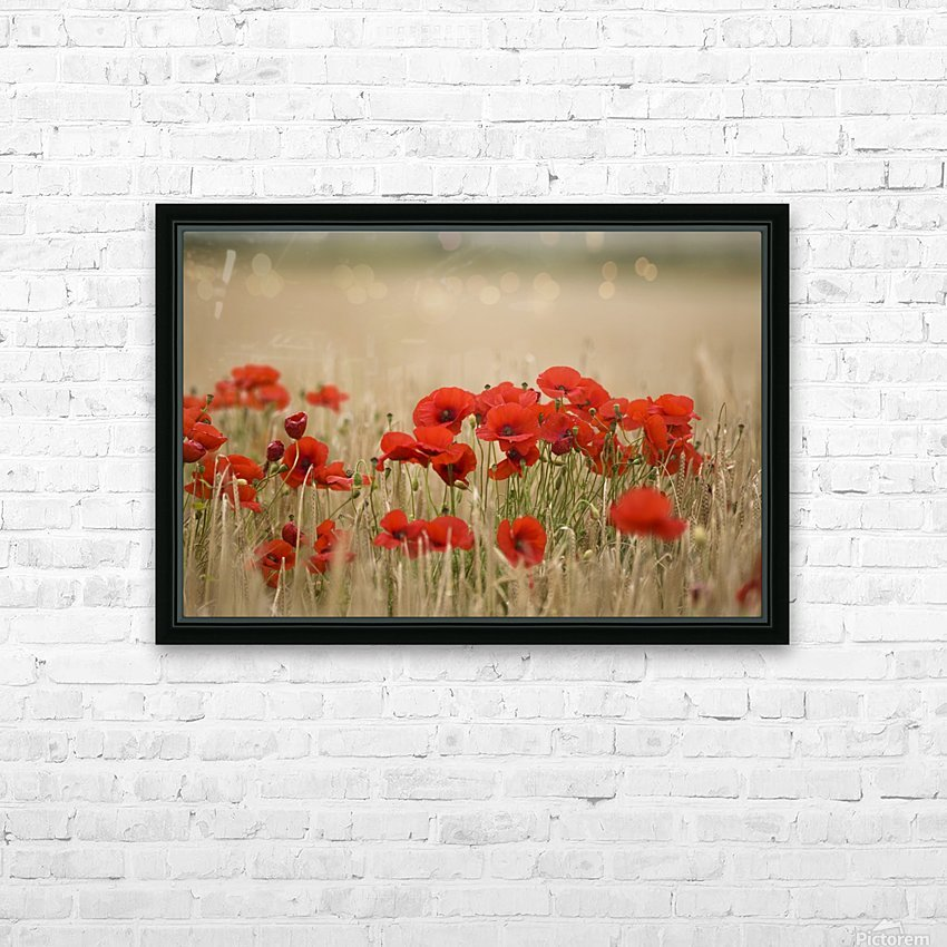 Poppies Growing Wild HD Sublimation Metal print with Decorating Float Frame (BOX)