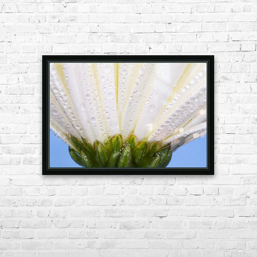 White Flower Head With Dew HD Sublimation Metal print with Decorating Float Frame (BOX)