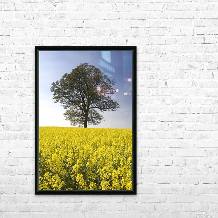 Tree In A Rapeseed Field, Yorkshire, England HD Sublimation Metal print with Decorating Float Frame (BOX)