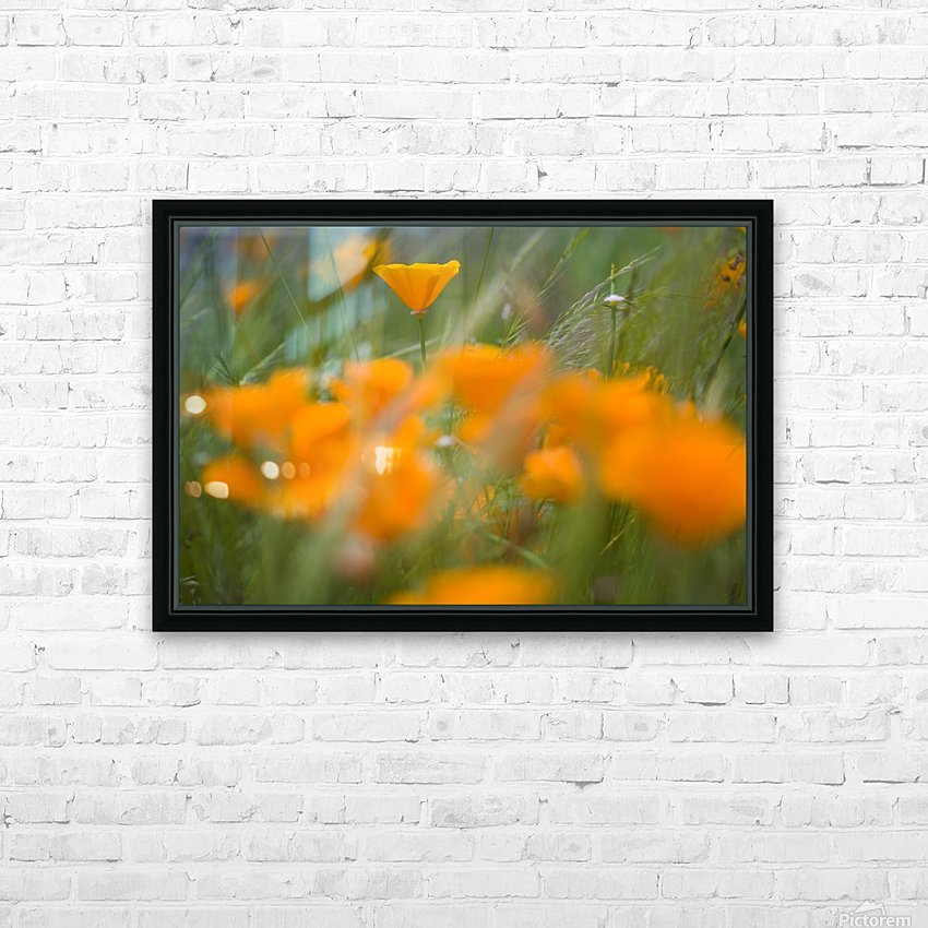 Close Up Of Orange Poppy Flowers HD Sublimation Metal print with Decorating Float Frame (BOX)