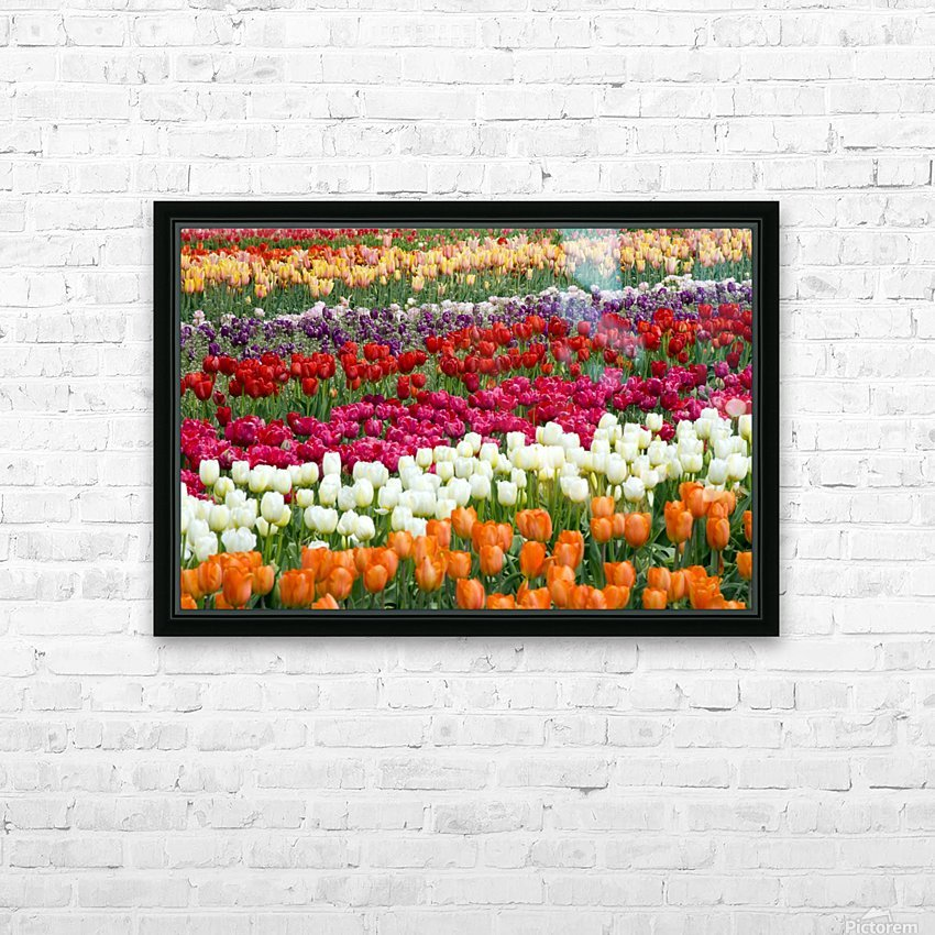 A Tulip Field HD Sublimation Metal print with Decorating Float Frame (BOX)