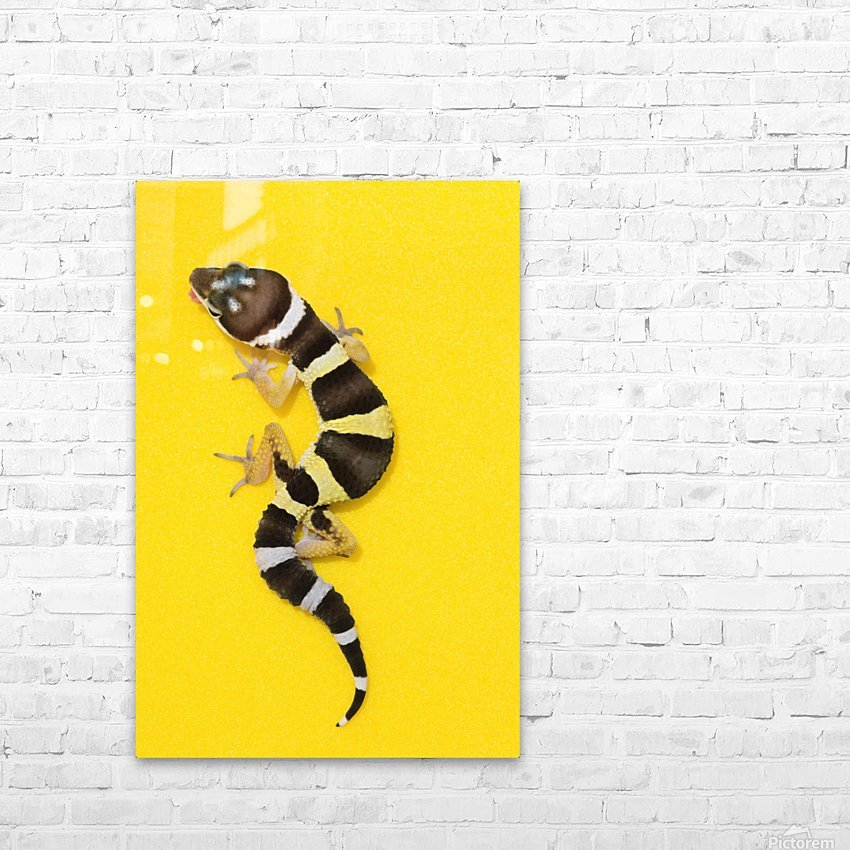 Baby Leopard Gecko On Yellow HD Sublimation Metal print with Decorating Float Frame (BOX)