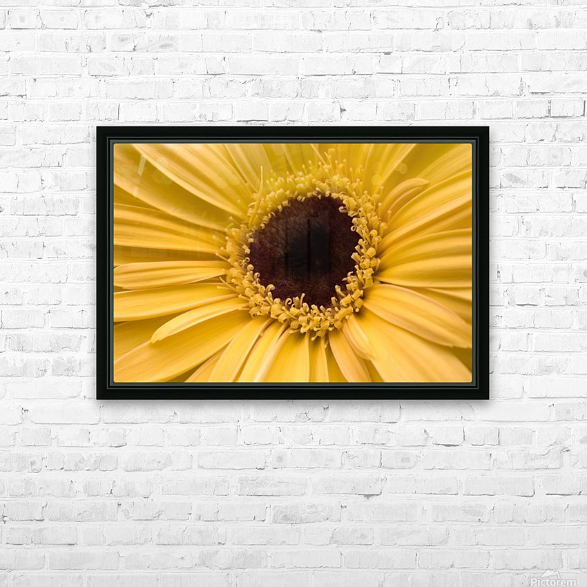 Close Up, Gerbera Daisy HD Sublimation Metal print with Decorating Float Frame (BOX)