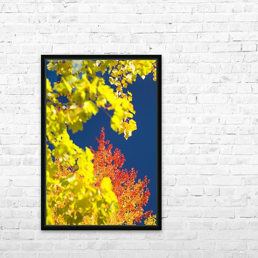 Autumn Trees HD Sublimation Metal print with Decorating Float Frame (BOX)