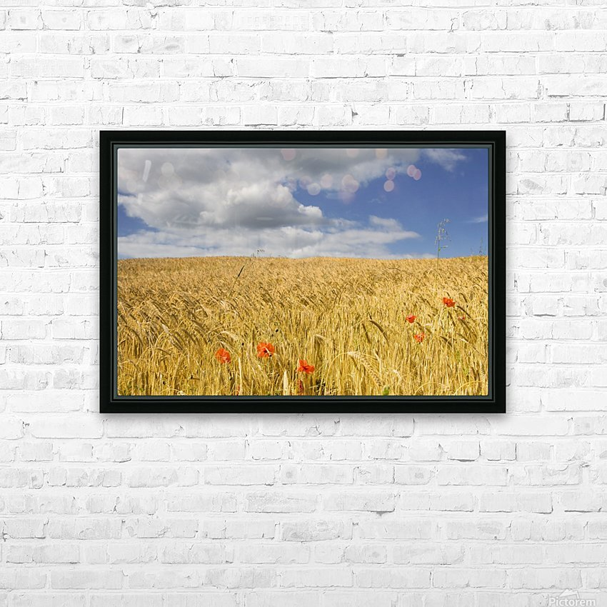 Wild Poppies In Wheat Field, North Yorkshire, England HD Sublimation Metal print with Decorating Float Frame (BOX)
