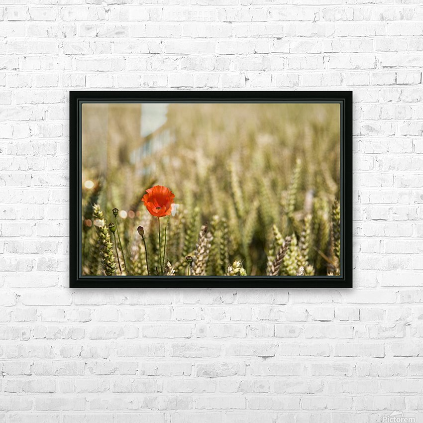 Poppy Flower In Field Of Wheat HD Sublimation Metal print with Decorating Float Frame (BOX)