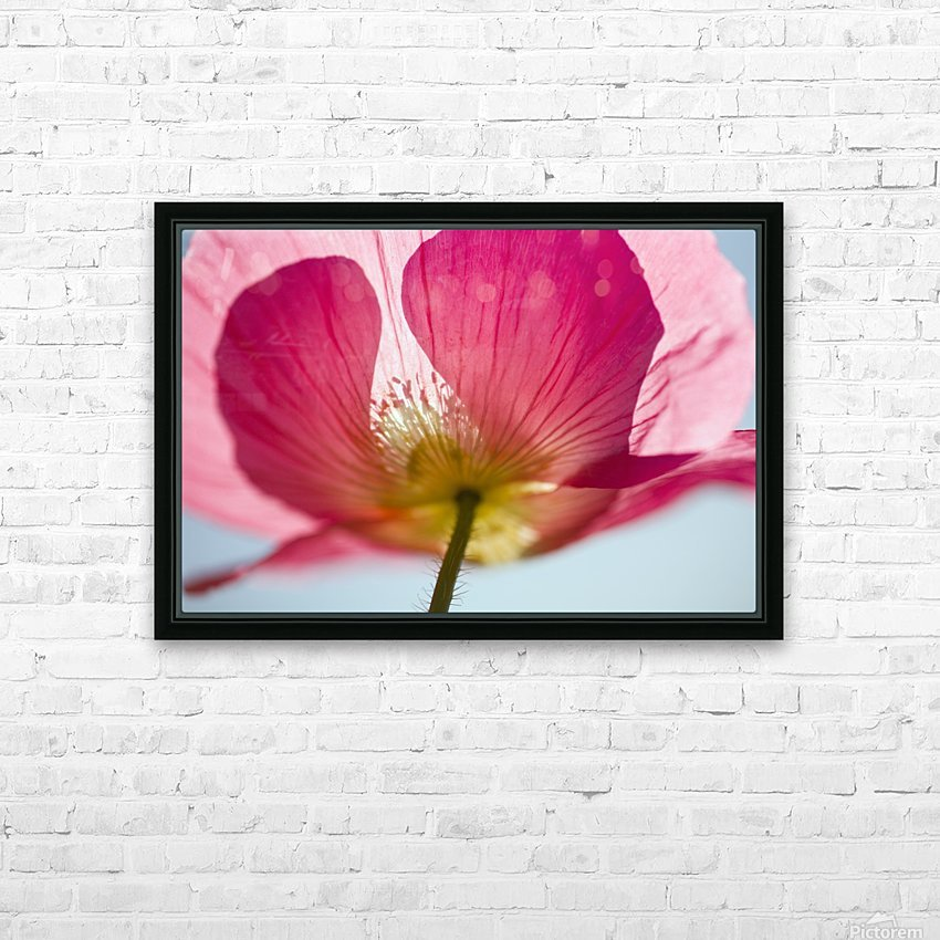 Pink Shirley Poppy HD Sublimation Metal print with Decorating Float Frame (BOX)