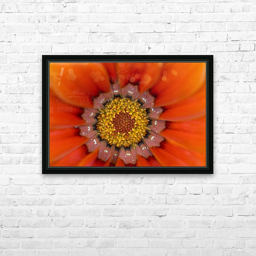 Lake Of The Woods, Ontario, Canada; Colourful Flowers In Bloom HD Sublimation Metal print with Decorating Float Frame (BOX)