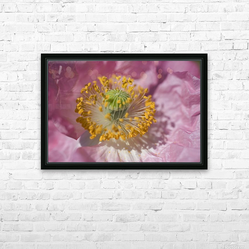 Shirley Poppy HD Sublimation Metal print with Decorating Float Frame (BOX)
