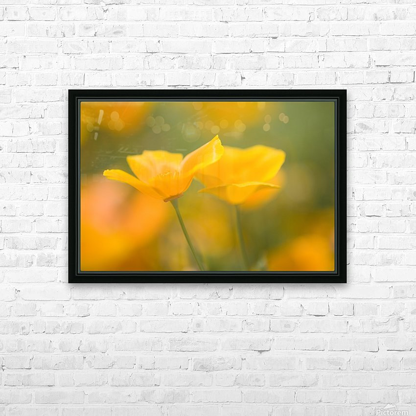 Yellow Poppy Flower, Mount Hood, Oregon, Usa HD Sublimation Metal print with Decorating Float Frame (BOX)