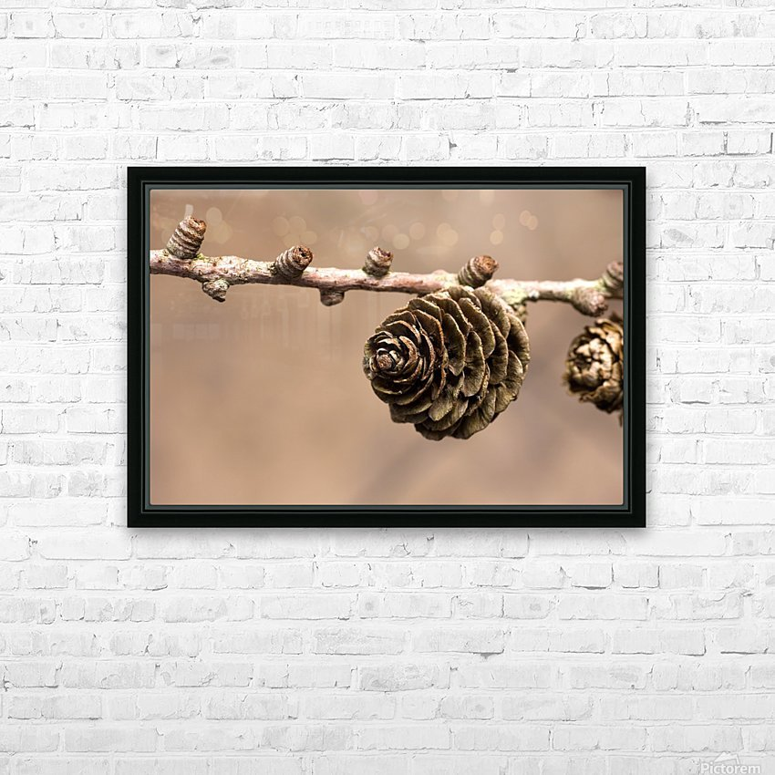 A Conifer Cone On A Tree Branch HD Sublimation Metal print with Decorating Float Frame (BOX)