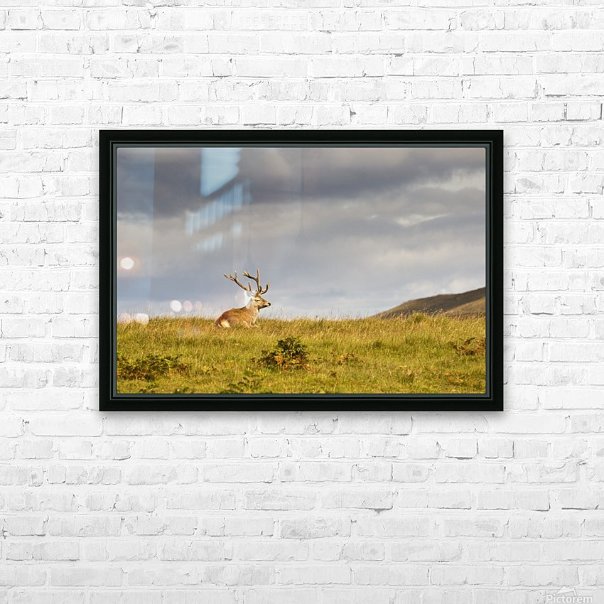 Island Of Islay, Scotland; Buck Resting On A Hill HD Sublimation Metal print with Decorating Float Frame (BOX)