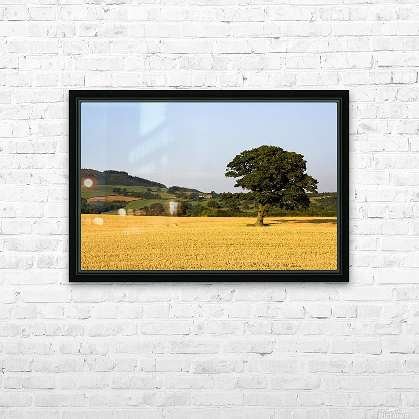 Tree In A Golden Field Of Grain, North Yorkshire, England HD Sublimation Metal print with Decorating Float Frame (BOX)