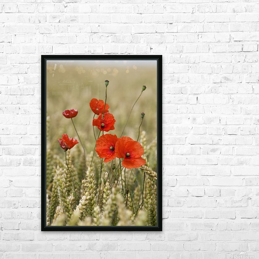 Wildflowers; Poppies In A Grain Field HD Sublimation Metal print with Decorating Float Frame (BOX)