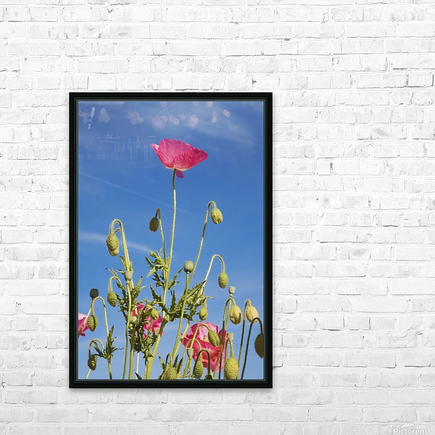 Red Flower Against Blue Sky HD Sublimation Metal print with Decorating Float Frame (BOX)