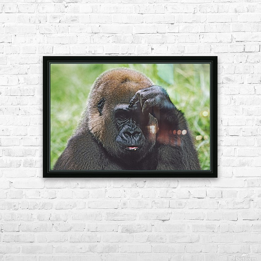 Western Gorilla Portrait With Finger On Brow As If Thinking, Africa HD Sublimation Metal print with Decorating Float Frame (BOX)