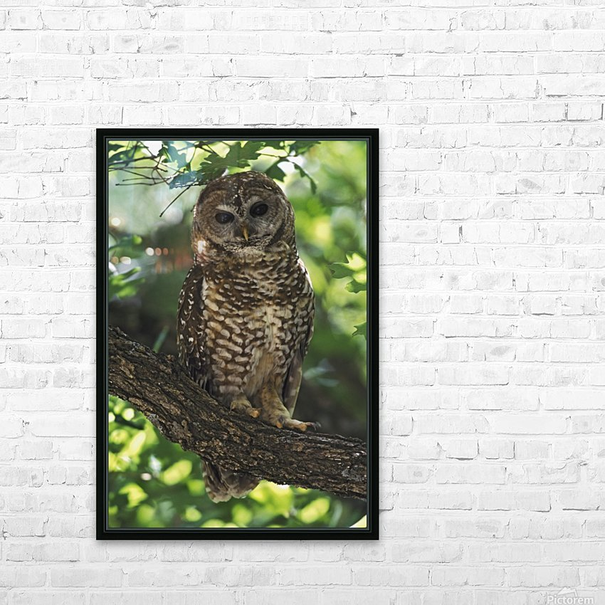 Mexican Spotted Owl On Perch In Gambel Oak HD Sublimation Metal print with Decorating Float Frame (BOX)
