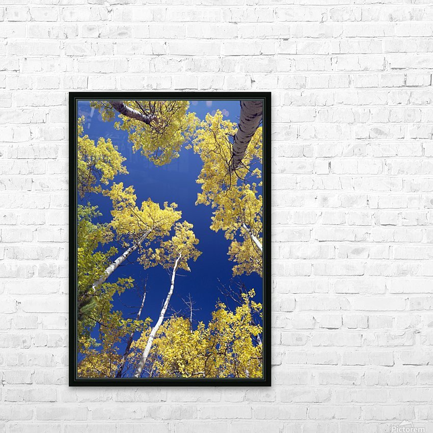 Forest During Autumn, Kananaskis, Alberta, Canada HD Sublimation Metal print with Decorating Float Frame (BOX)