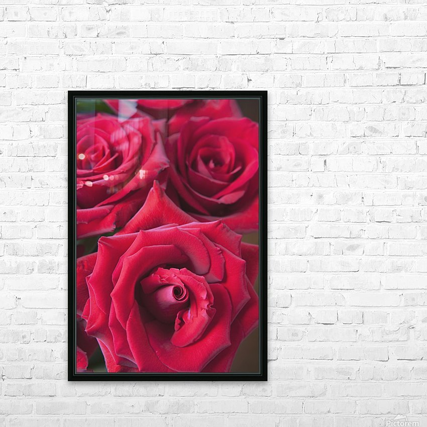 Red Roses; Quebec, Canada HD Sublimation Metal print with Decorating Float Frame (BOX)