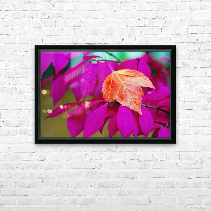 Oregon, United States Of America; A Red Leaf Laying On Bright Pink Leaves HD Sublimation Metal print with Decorating Float Frame (BOX)