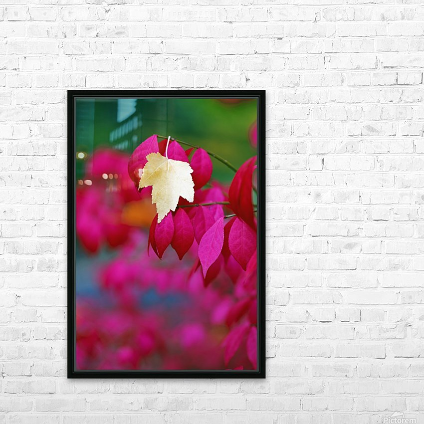 Oregon, United States Of America; A Yellow Leaf Fallen On Pink Leaves HD Sublimation Metal print with Decorating Float Frame (BOX)