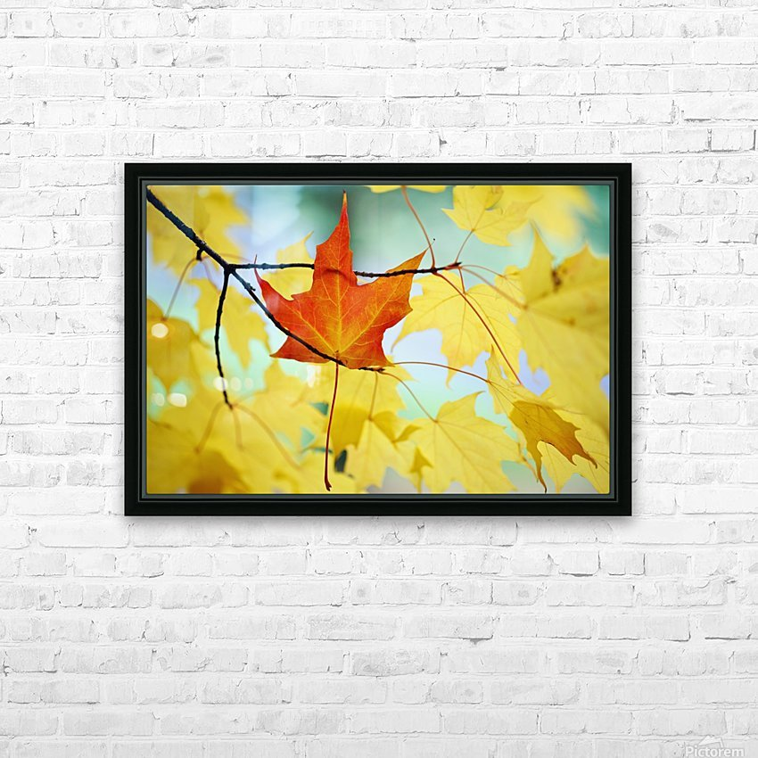 Oregon, United States Of America; An Orange Leaf Fallen On Yellow Leaves HD Sublimation Metal print with Decorating Float Frame (BOX)