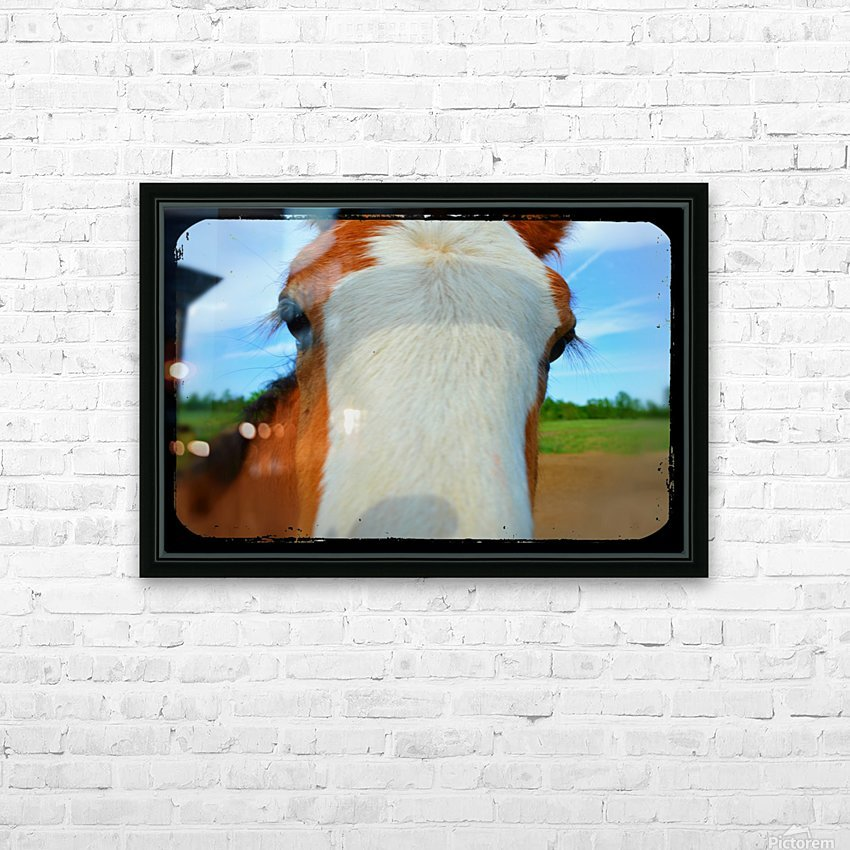 Baby Clydesdale HD Sublimation Metal print with Decorating Float Frame (BOX)