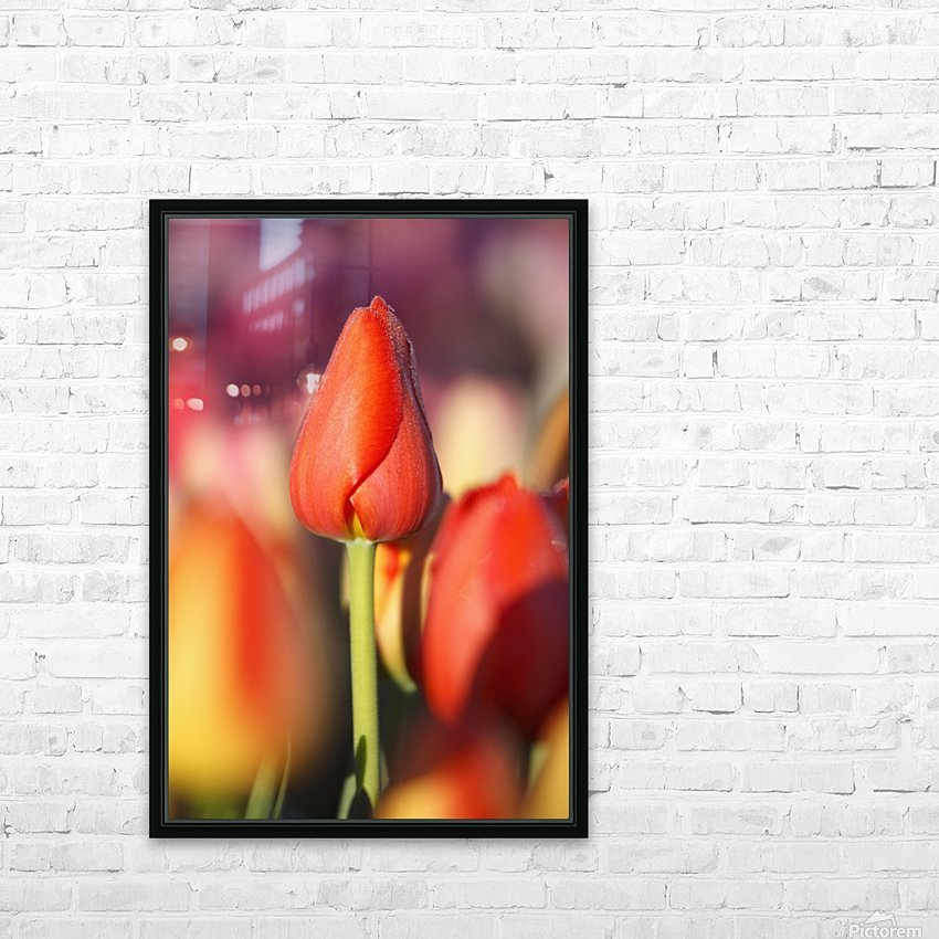Woodburn, Oregon, United States Of America; Close Up Of A Closed Tulip HD Sublimation Metal print with Decorating Float Frame (BOX)