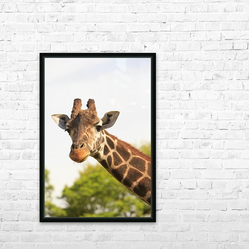 Buenos Aires, Argentina; Giraffe (Giraffa Camelopardalis) In Palermo Zoological Gardens HD Sublimation Metal print with Decorating Float Frame (BOX)