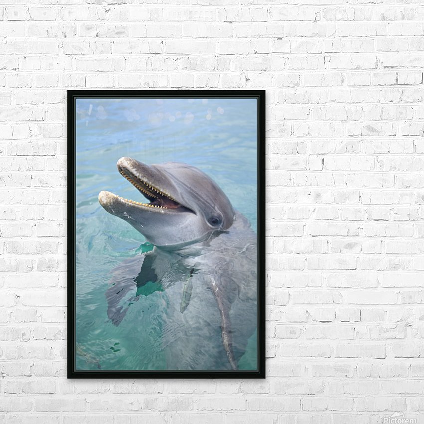 Roatan, Bay Islands, Honduras; A Bottlenose Dolphin (Tursiops Truncatus) In The Water At Anthony's Key Resort HD Sublimation Metal print with Decorating Float Frame (BOX)