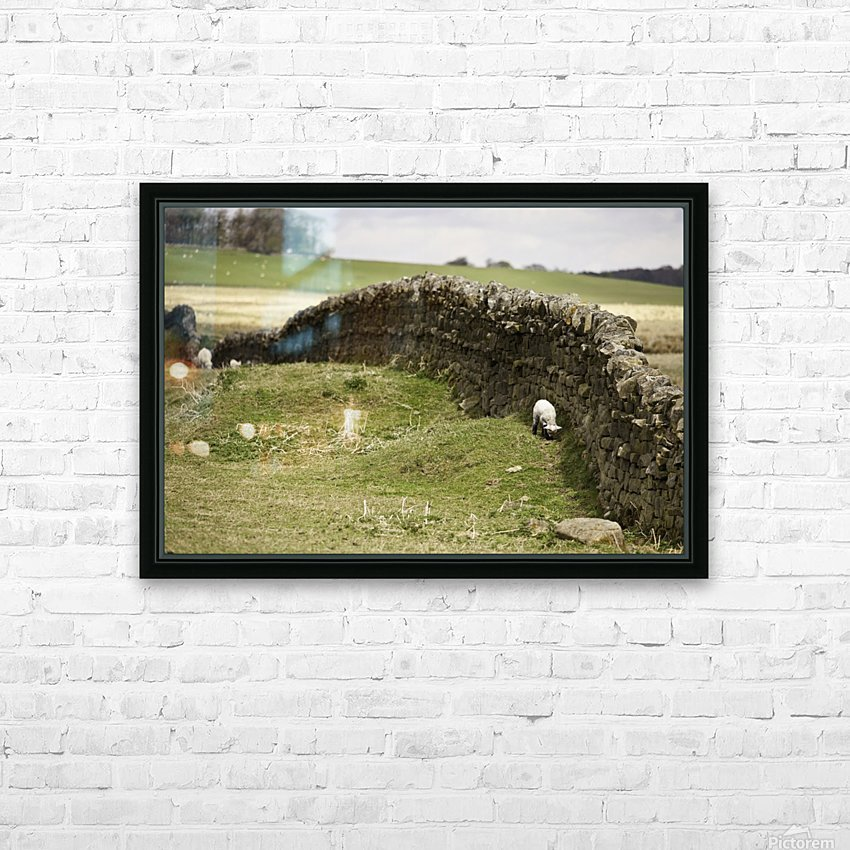 Northumberland, England; Sheep Grazing Along A Stone Wall HD Sublimation Metal print with Decorating Float Frame (BOX)