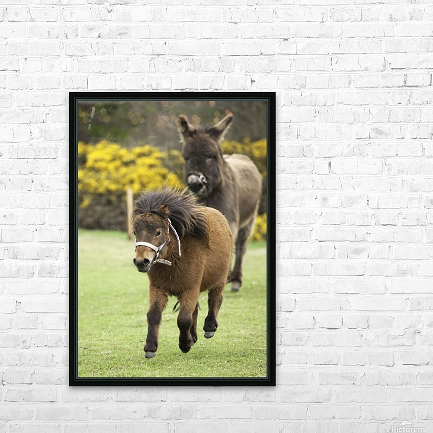 Northumberland, England; Two Ponies Running In A Field HD Sublimation Metal print with Decorating Float Frame (BOX)