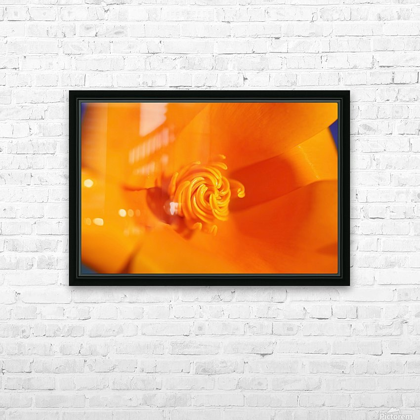 Close Up Of A Poppy Flower; Happy Valley, Oregon, Usa HD Sublimation Metal print with Decorating Float Frame (BOX)