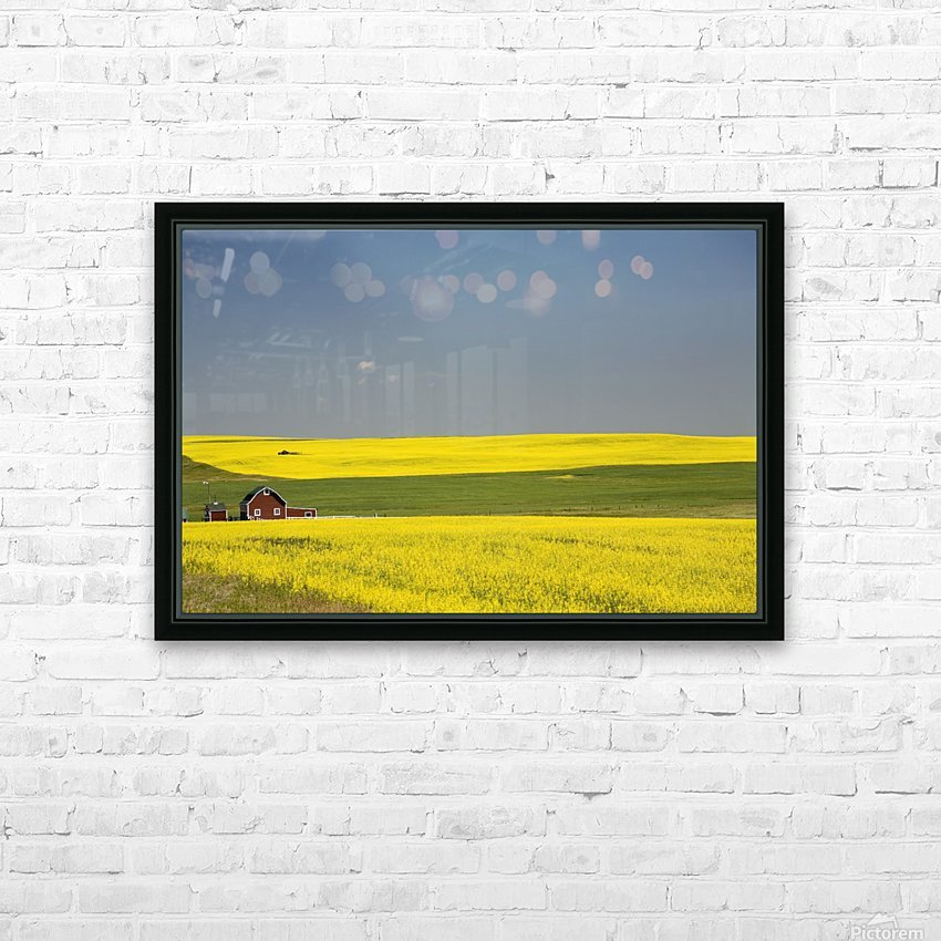 Flowering Canola Fields And A Red Barn; Alberta, Canada HD Sublimation Metal print with Decorating Float Frame (BOX)