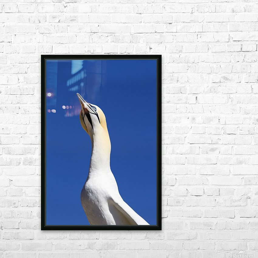A Single Gannet Searches The Sky For Her Mate On Bonaventure Island; Perce, Quebec, Canada HD Sublimation Metal print with Decorating Float Frame (BOX)