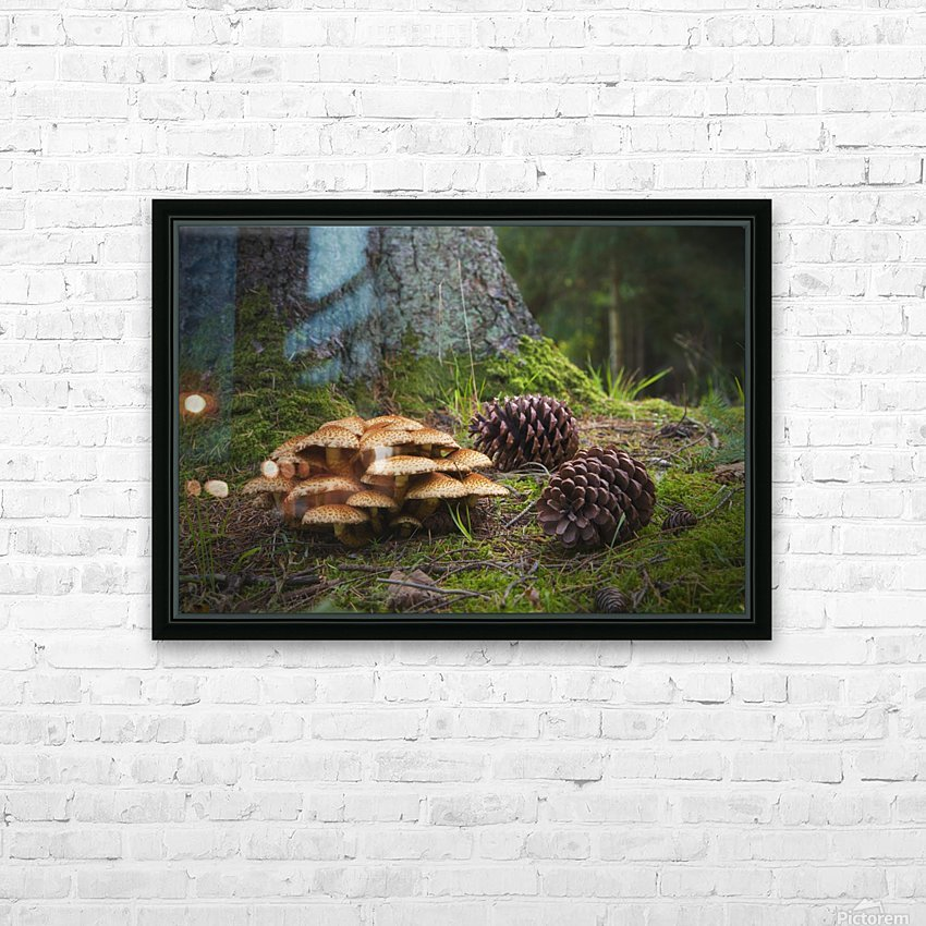 Mushrooms And Pine Cones On The Forest Floor; Northumberland, England HD Sublimation Metal print with Decorating Float Frame (BOX)