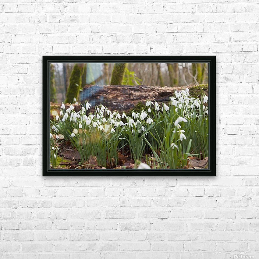 White Flowers Growing On A Forest Floor Beside A Fallen Tree; Dumfries, Scotland HD Sublimation Metal print with Decorating Float Frame (BOX)