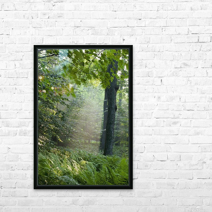 Trees In The Woods In The Early Morning Fog; Iron Hill, Quebec, Canada HD Sublimation Metal print with Decorating Float Frame (BOX)