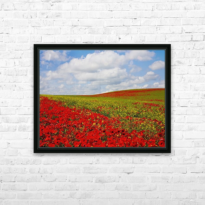 An Abundance Of Red Poppies In A Field; Corbridge, Northumberland, England HD Sublimation Metal print with Decorating Float Frame (BOX)