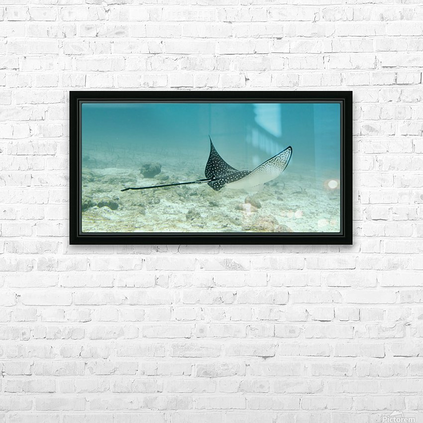 A Spotted Eagle Ray (Aetobatus Narinari)Under The Water; Galapagos, Equador HD Sublimation Metal print with Decorating Float Frame (BOX)