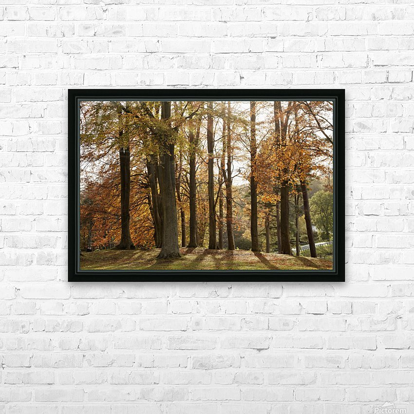 Trees In Autumn Colours Casting A Shadow On The Ground; Northumberland, England HD Sublimation Metal print with Decorating Float Frame (BOX)