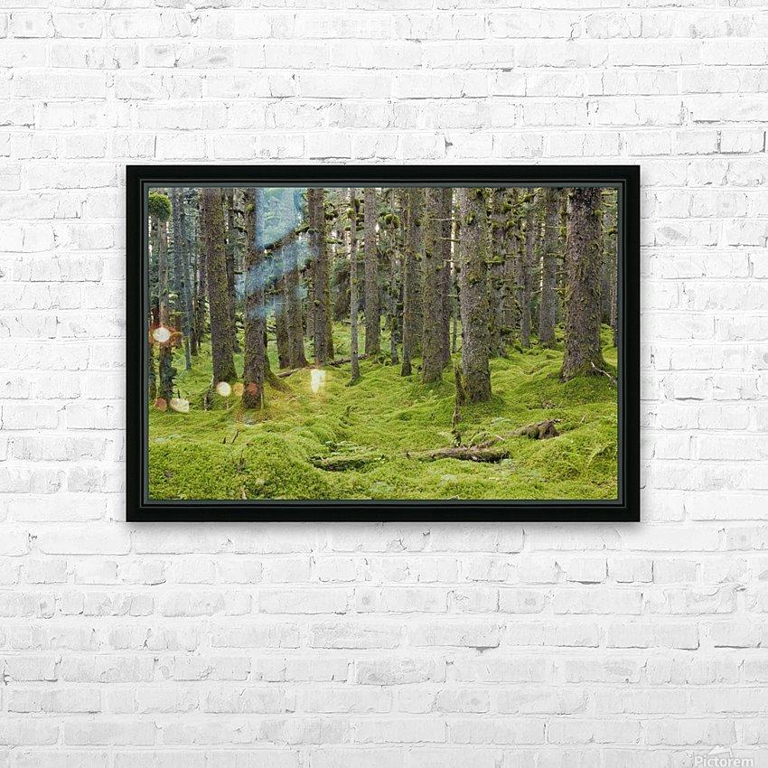 Spruce Forest & Moss Near Coast Kodiak Island Southwest Alaska HD Sublimation Metal print with Decorating Float Frame (BOX)