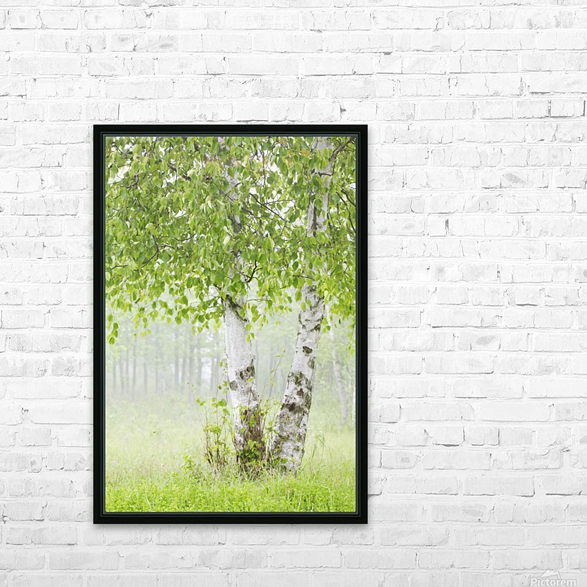 Birch trees in fog;Thunder bay ontario canada HD Sublimation Metal print with Decorating Float Frame (BOX)