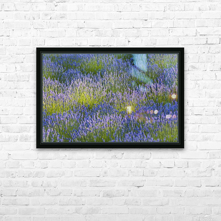 Rows of lavender plants in a field in the cowichan valley;Vancouver island british columbia canada HD Sublimation Metal print with Decorating Float Frame (BOX)