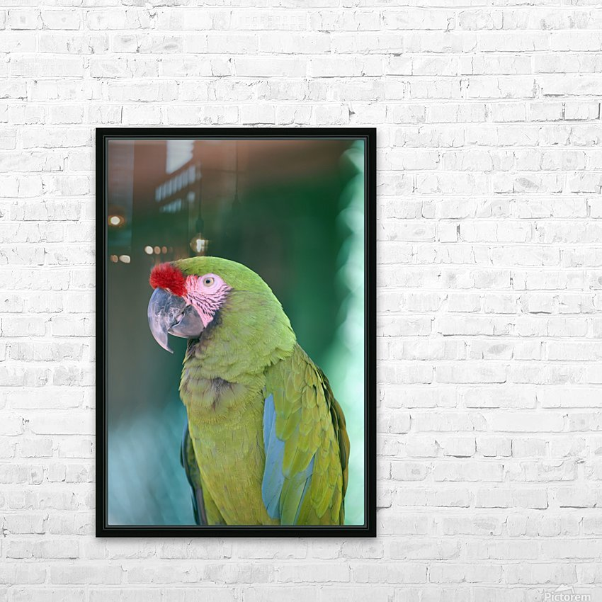 Close up of a parrot;Puerto vallarta mexico HD Sublimation Metal print with Decorating Float Frame (BOX)