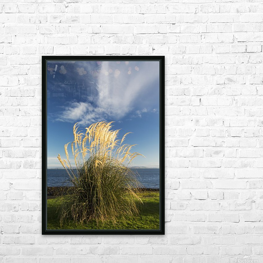 Tall grasses growing at the water's edge;Dumfries and galloway scotland HD Sublimation Metal print with Decorating Float Frame (BOX)