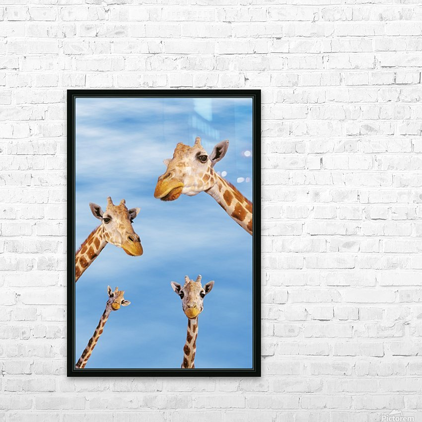 Four giraffes looking downward;Africa HD Sublimation Metal print with Decorating Float Frame (BOX)