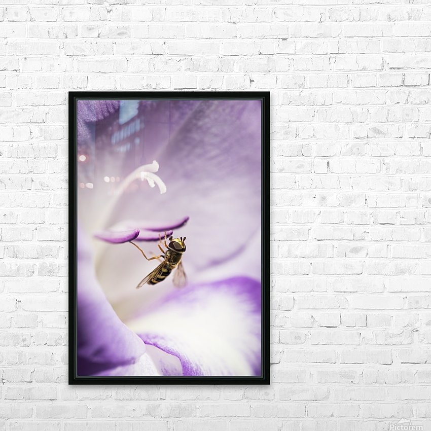 A Hoverfly Visits A Gladiolus Blossom; Astoria, Oregon, United States Of America HD Sublimation Metal print with Decorating Float Frame (BOX)